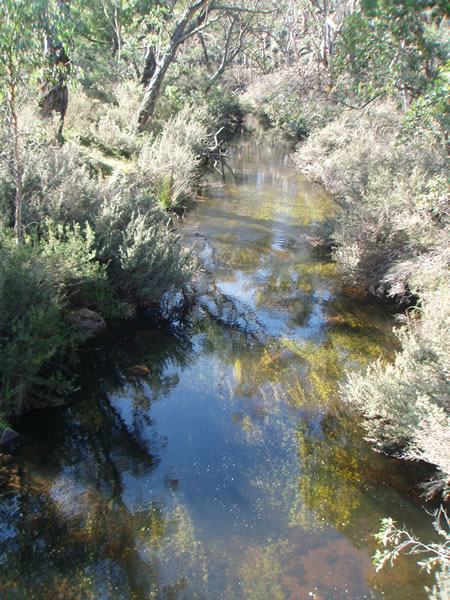 Remote high-country stream with lush weed beds.