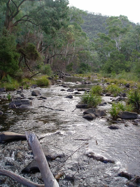 Wellington River, Gippsland VIC